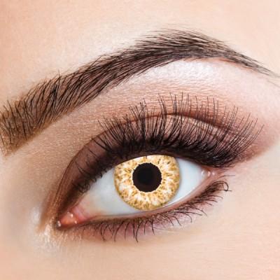 Aricona Golden Eye